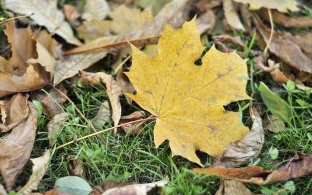 Zdjęcie liści.